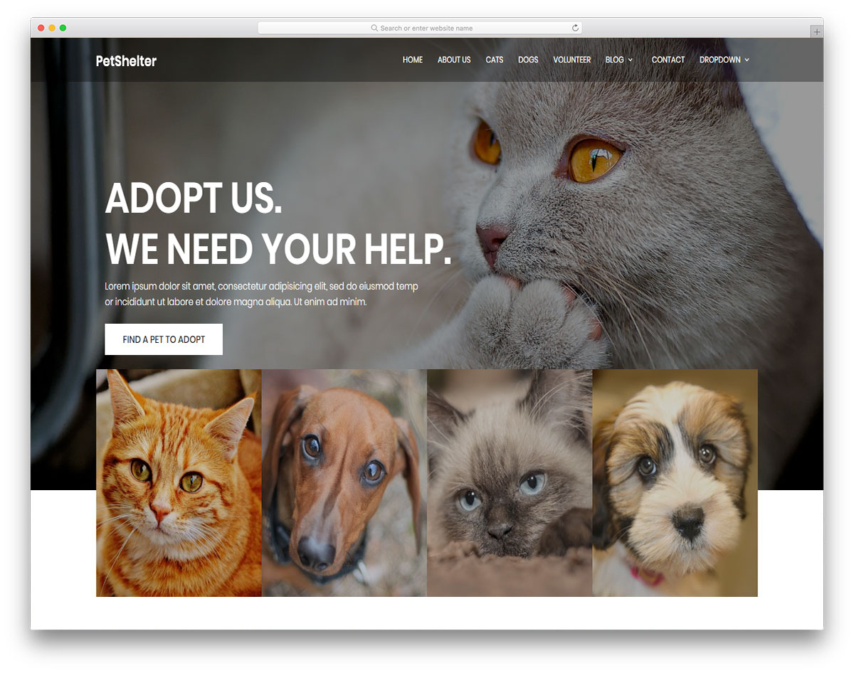 animalshelter-free-web-design-templates
