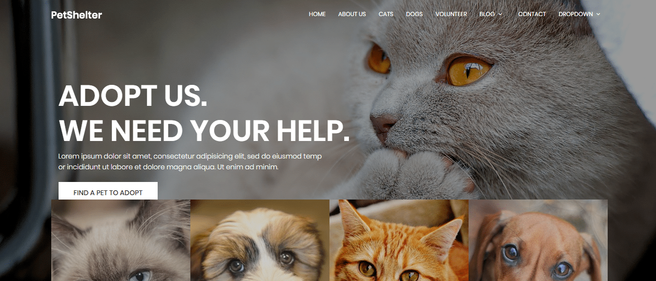 animal-and-pets-website-template-animal-shelter
