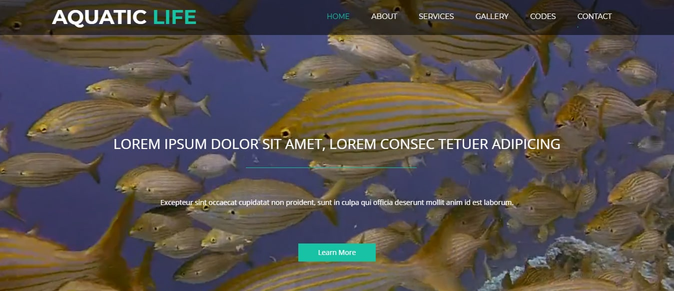 animal-and-pets-website-template-aquatic-life