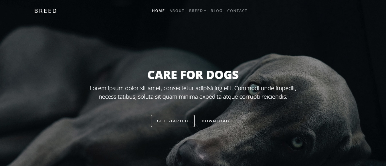 animal-and-pets-website-template-breed