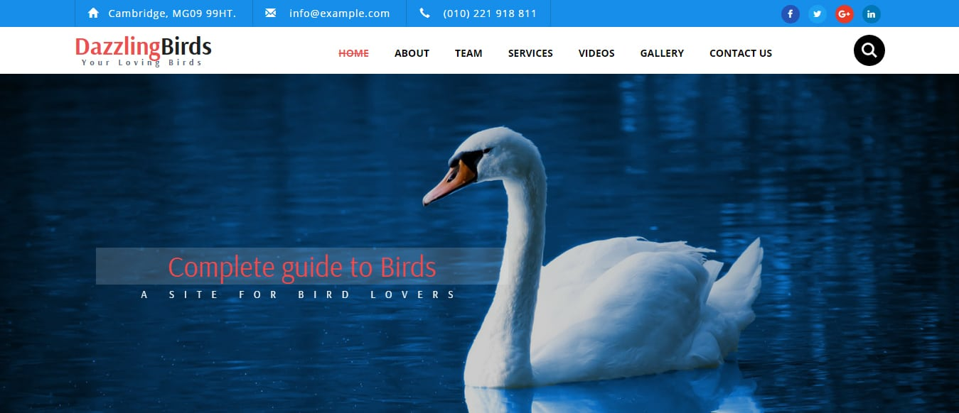 animal-and-pets-website-template-dazzling-birds