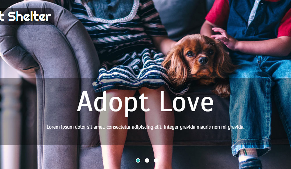 animal-and-pets-website-template-pet-shelter