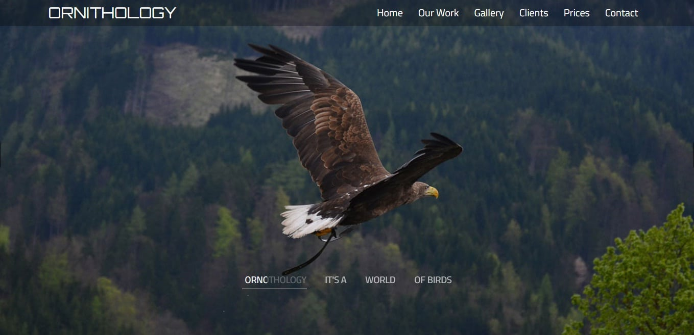 ornithology-animal-and-pet-website-template