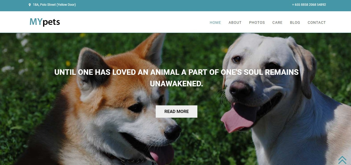 my pets animal and pets website template