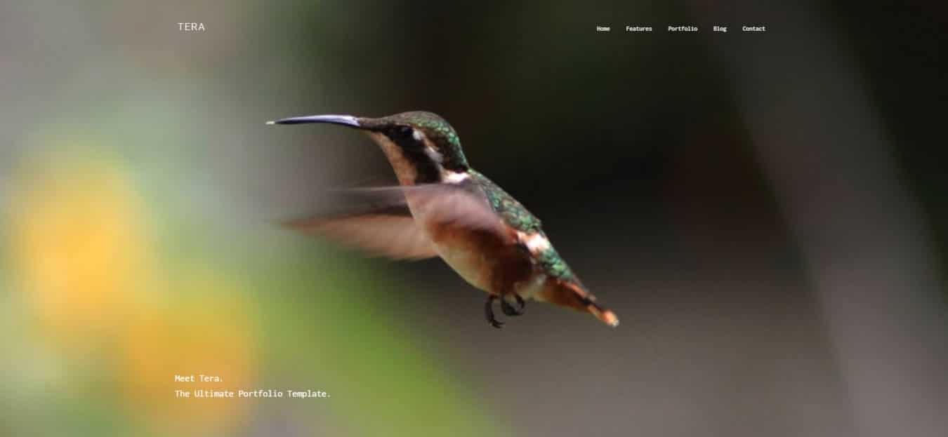graphic design website templates tera
